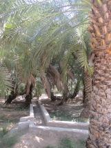 001_08.10.14_Al Ain (4)